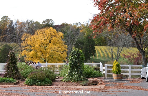 Vines and ground of Barboursville Vineyard in Virginia wine country