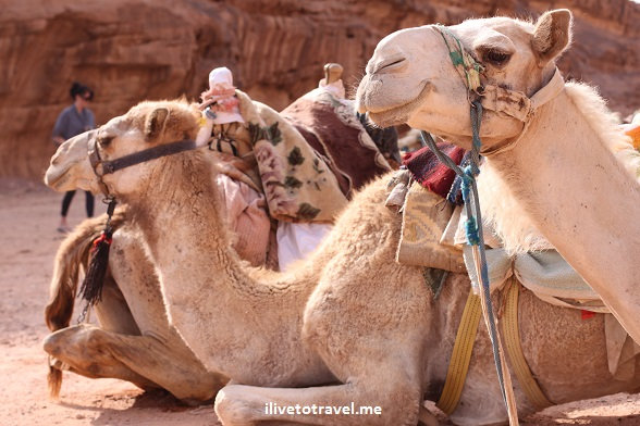"Camel ""Wadi Rum"" desert Jordan exploration outdoors adventure wild photo travel"